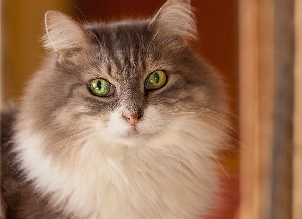 adopt a cat bg