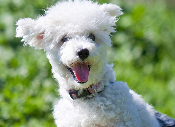 adopt a dog bg