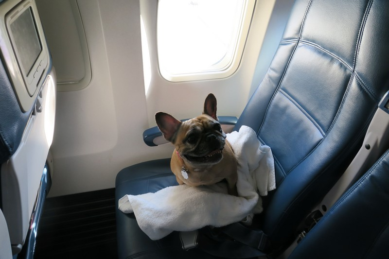 TravelingWithCompanionAnimals Photo
